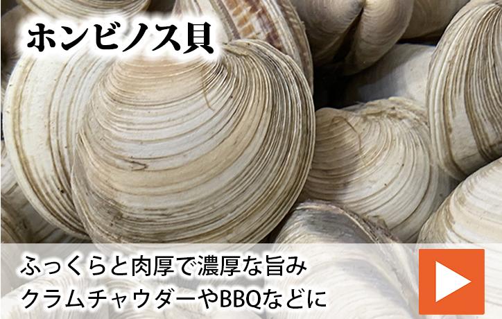 ホンビノ貝