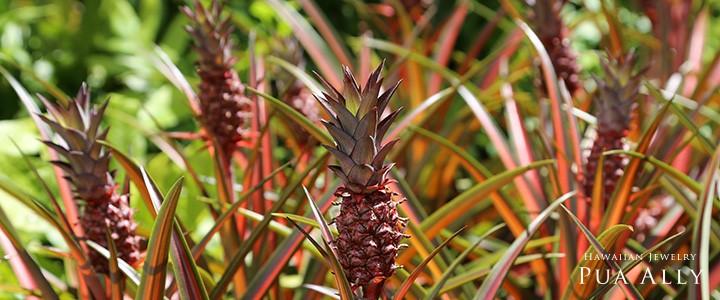 Pineappleパイナップル