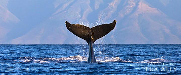 Whale taleホエールテール