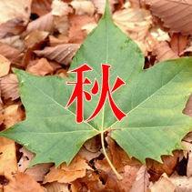 秋 秋色 クッション マフラー ブランケット