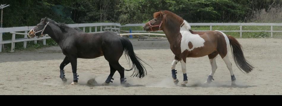 かわいい馬たち屋さんヤフー店