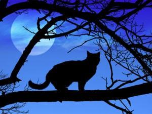 三日月猫 クレセントムーン・キャット