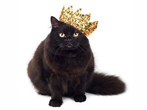 クラウンキャット王冠猫