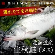 北海道産生秋鮭