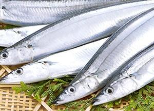 トロ秋刀魚