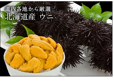 北海道産ウニ