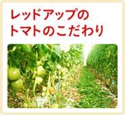 レッドアップのトマトのこだわり