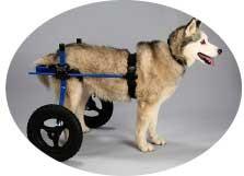 犬用車椅子 L