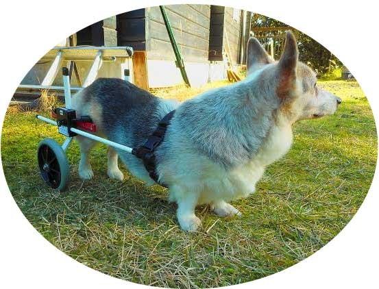 犬用車椅子 M