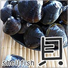 魚(fish) 産地直送の美味しい貝を食卓に