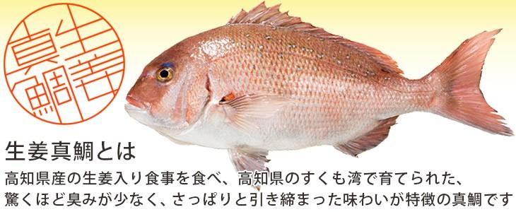 生姜真鯛とは
