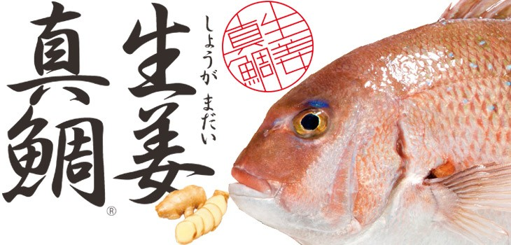 高知県産の生姜入り食事で育った生姜真鯛は驚くほど臭みが少なく、さっぱりと引き締まった味わいが特徴。調理しやすいように鱗・鰓・腹を丁寧に処理した贅沢加工。