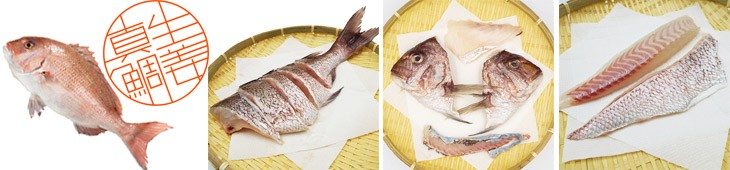 生姜真鯛は贅沢加工