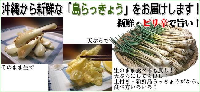 新鮮・沖縄島野菜「島らっきょう」ピリ辛で旨い!