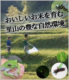 おいしいお米育む自然