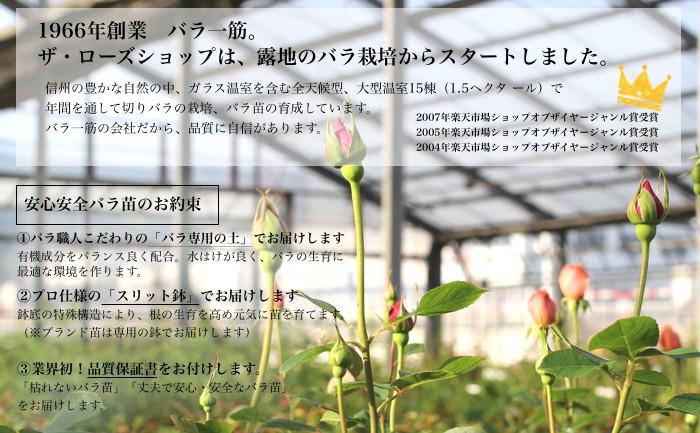 1966年創業バラ一筋。ザ・ローズショップは露地のバラ栽培からスタートしました。バラ一筋のお店だから、品質に自信があります。