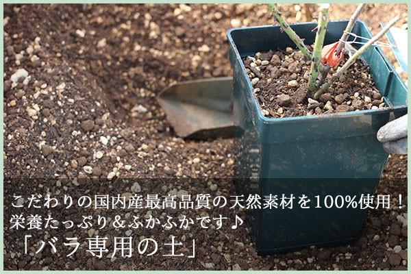 バラ専用の土 バラを育てる