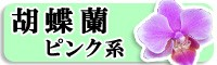 胡蝶蘭 ピンク