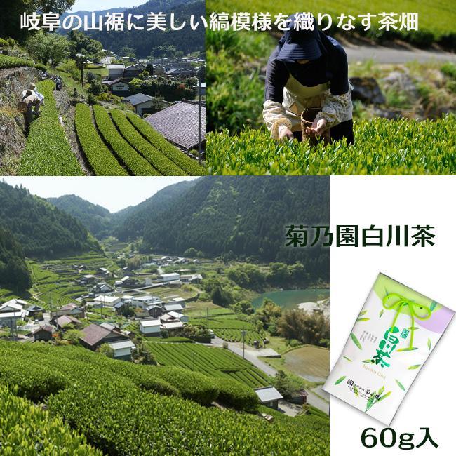 白川茶60g