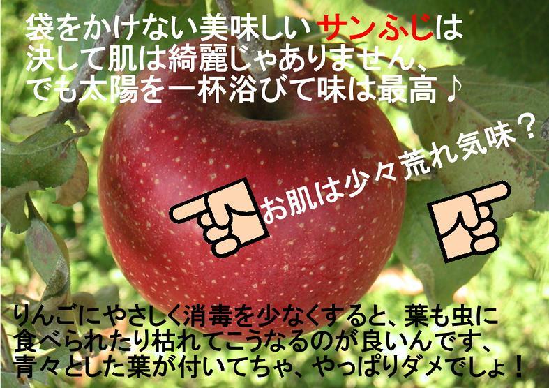 長野りんご サンふじりんご
