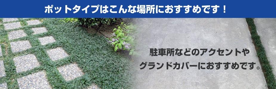 玉竜ポットタイプのおすすめの植え付け場所