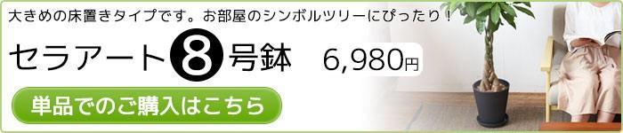 セラアート8号鉢