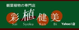 観葉植物の専門店 彩植健美 Yahoo!店