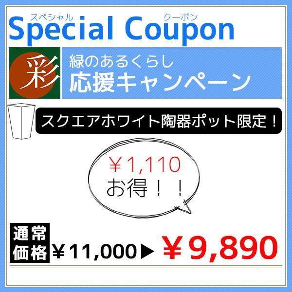 スクエアホワイト陶器ポットで使える1,110円OFFクーポン