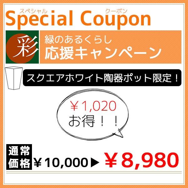 スクエアホワイト陶器ポットで使える1,020円OFFクーポン