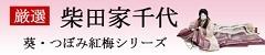 柴田家千代作人気の葵、つぼみ紅梅シリーズ