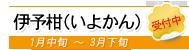 伊予柑(いよかん)