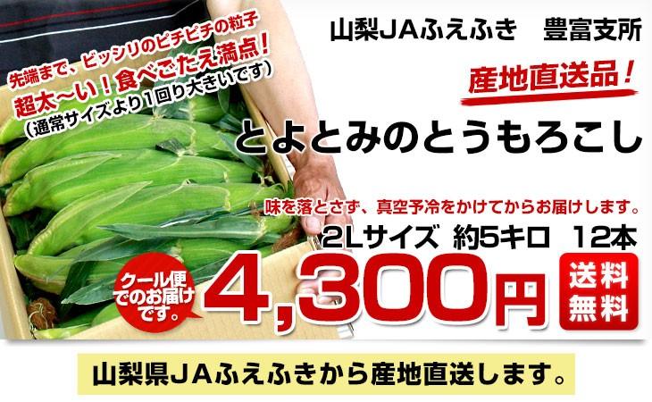 d_corn16_00b.jpg