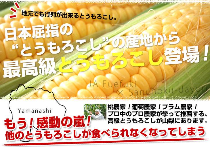 d_corn16_top01b.jpg