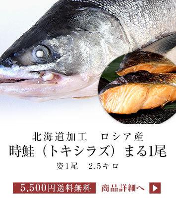 時鮭まるごと1尾