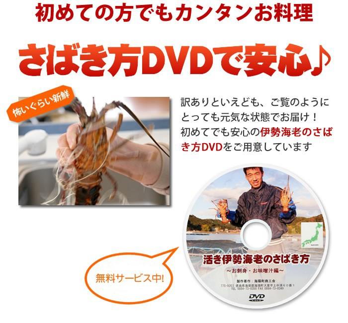 徳島の東水産からお届けする天然伊勢海老 イセエビのさばき方dvdプレゼント中!