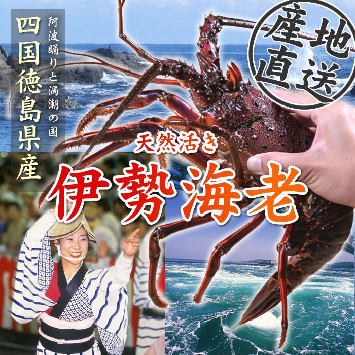 ウェルかめの舞台地の海から産地直送!