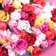 50本のバラの花束