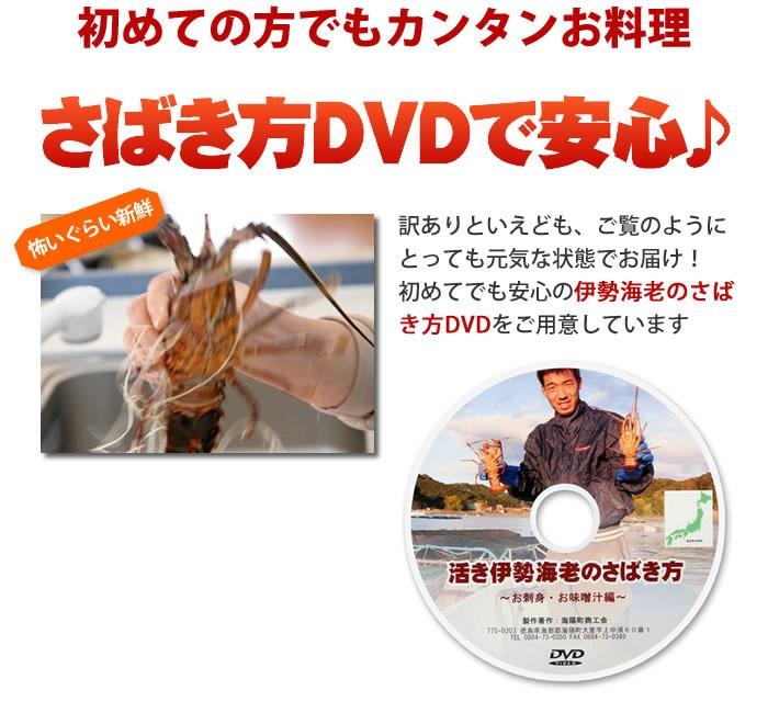 さばき方DVDで不安解消