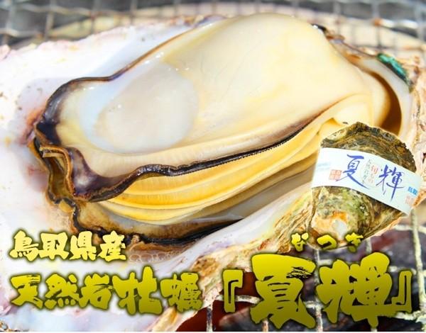 鳥取県産天然岩牡蠣 「夏輝」