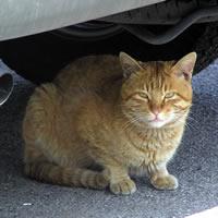 加工場に住み着く猫