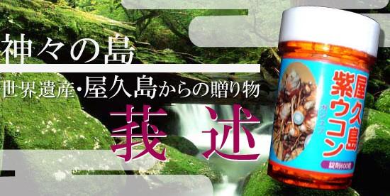 屋久島産 紫ウコン(ガジュツ)商品画像