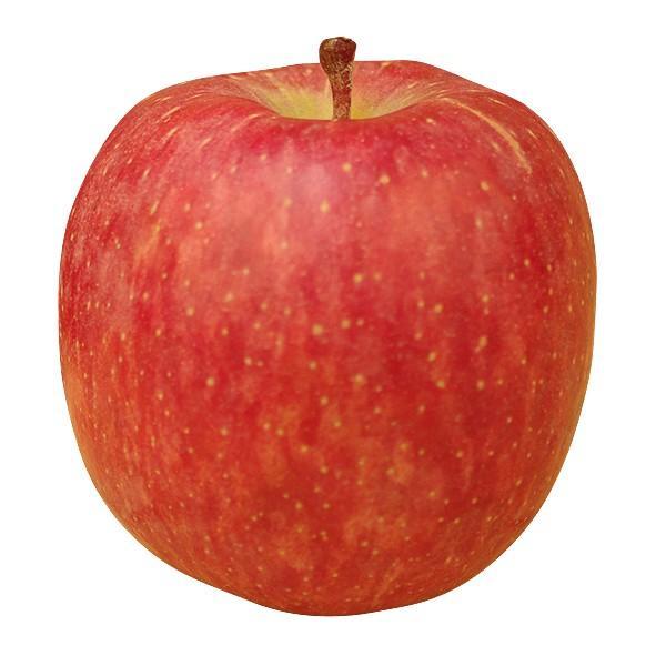 りんご リンゴ おまかせりんご(10kg1箱)ご家庭用 青森産 「赤りんご ...