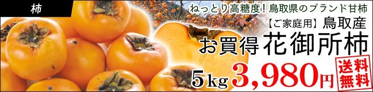 大特価花御所柿