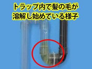 スカットワンジェルによる排水管トラップ内の髪の毛溶解の様子