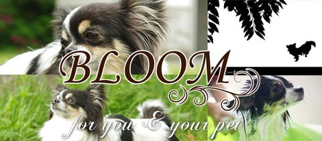 BLOOM DOG CARE