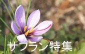 サフラン(クンクマディ)特集