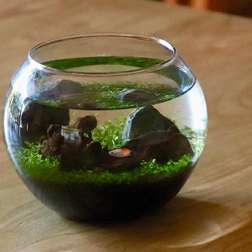 レイアウトが出来る アクアリウム 種から 育てる水草 L