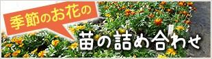 季節のお花の苗の詰め合わせ