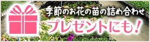 季節のお花の苗の詰め合わせ プレゼントにも!