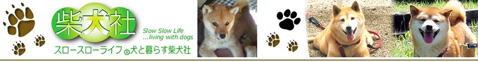 スロースローライフ犬と暮らす柴犬社